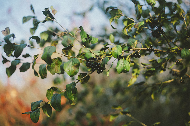 more than just surviving survivalist resolutions wilderness survival skills