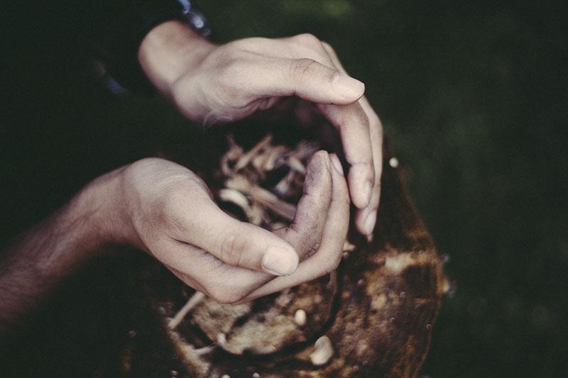 survivalist prepper survival blog article refine skills